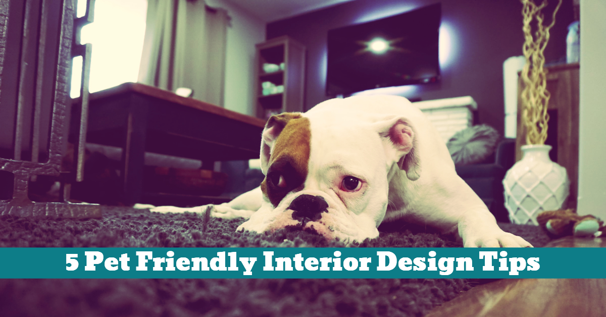 Pet_Interior_Design_Floors_Space_Materials_Surfaces