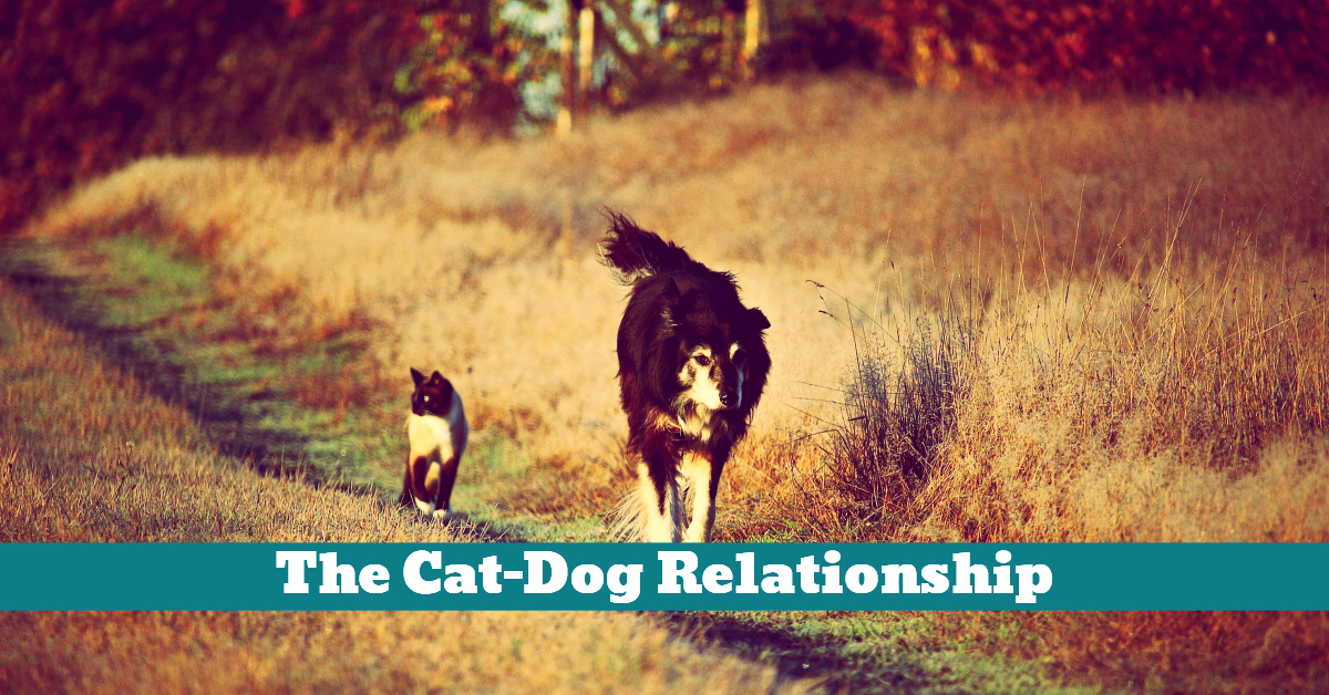 Cat_Dog_Relations_Relationships_