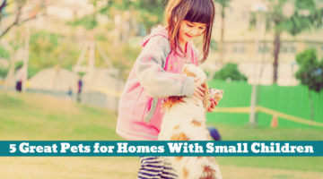5 Great Pets for Homes With Small Children
