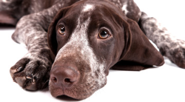 Great Dog Breeds That Nobody Knows About