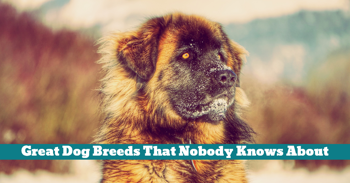 Dog_Breeds_Uncommon_Rare_Special_Great