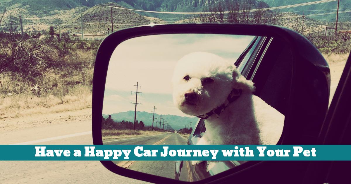 Pet_Car_Journey_Trip_Travel