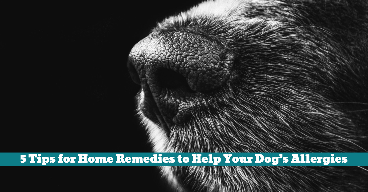 Dog_Allergy_Allergies_Remedy_Remedies