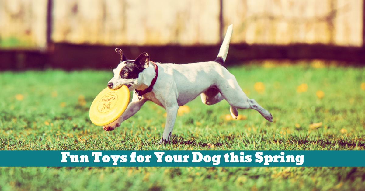 Dog_Frisbee_Spring_Toys_Ball