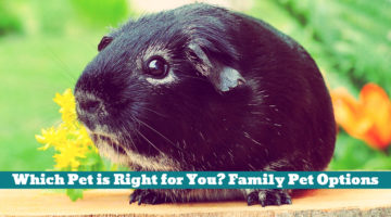 Which Pet is Right for You? Family Pet Options