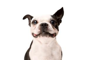 happy_dog