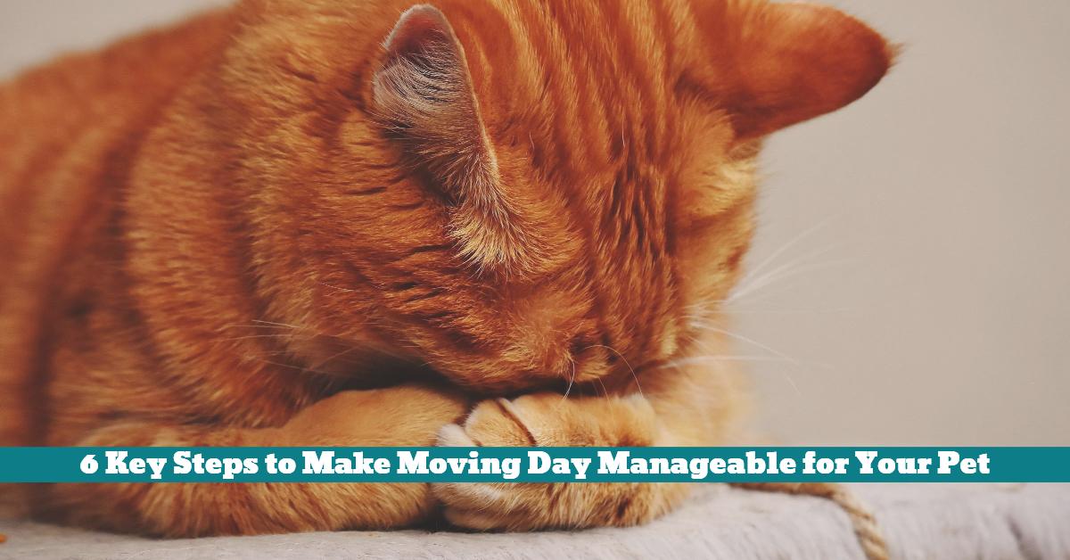 Pet_Move_Day_Relocation_Destination_Reward