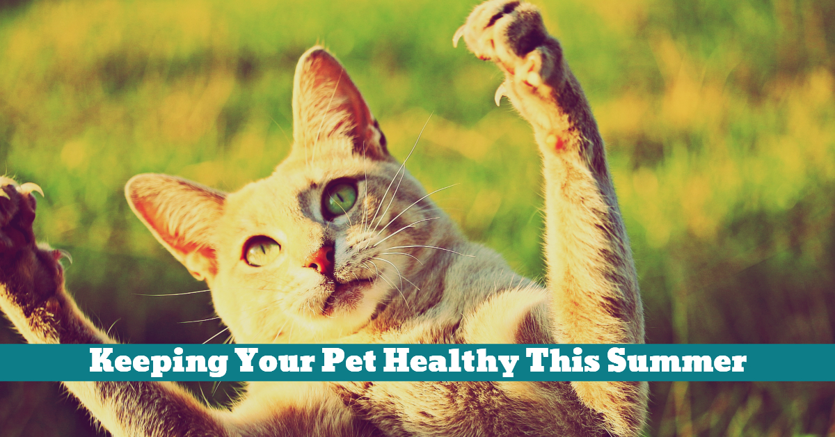 Pet_Health_Fleas_Ticks_Worms_First_Aid