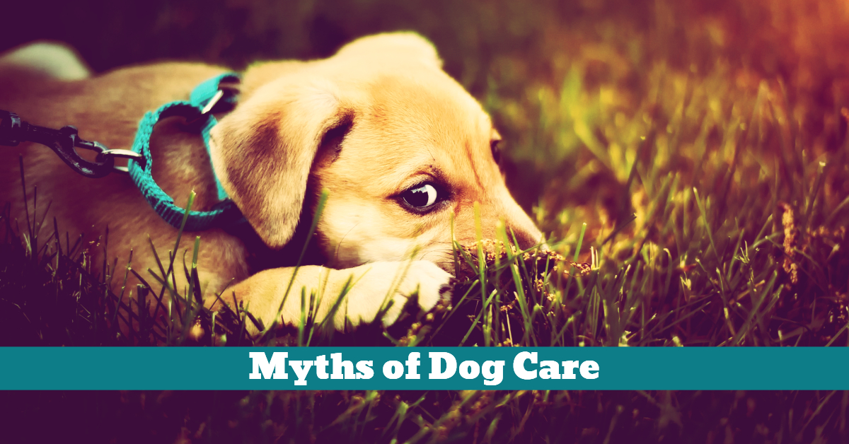 Dog_Myths_Wagging_Tail_Grass_Eating_Moist_Nose