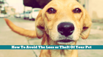 How To Avoid The Loss or Theft Of Your Pet