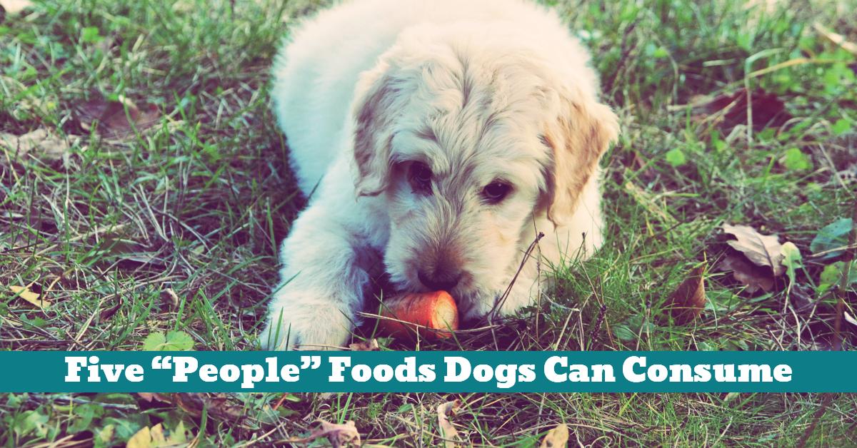 Dog_People_Food_Vegetables_Rice_Yogurt_Eggs_Raw_Cooked_Meats