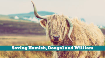 Saving Hamish, Dougal and William