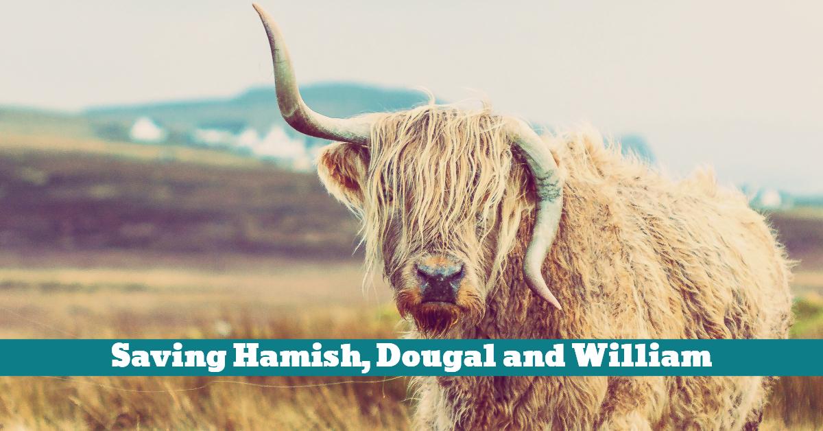 Animal_Sanctuary_Highland_Cow_Rescue