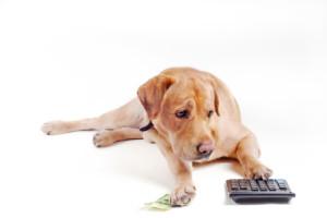 Dog_count_on_calculator