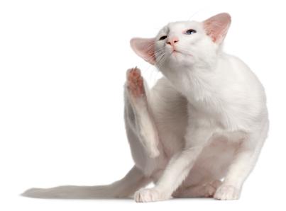 cat_scratching