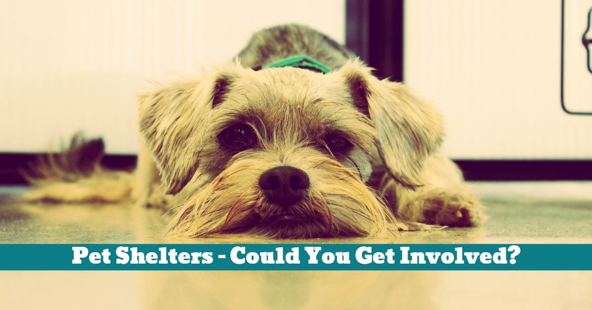 Pet_Shelter_Donating_Volunteering_Adopting