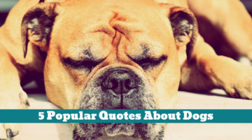 5 Popular Quotes About Dogs
