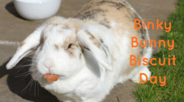 Binky Bunny Biscuit Day