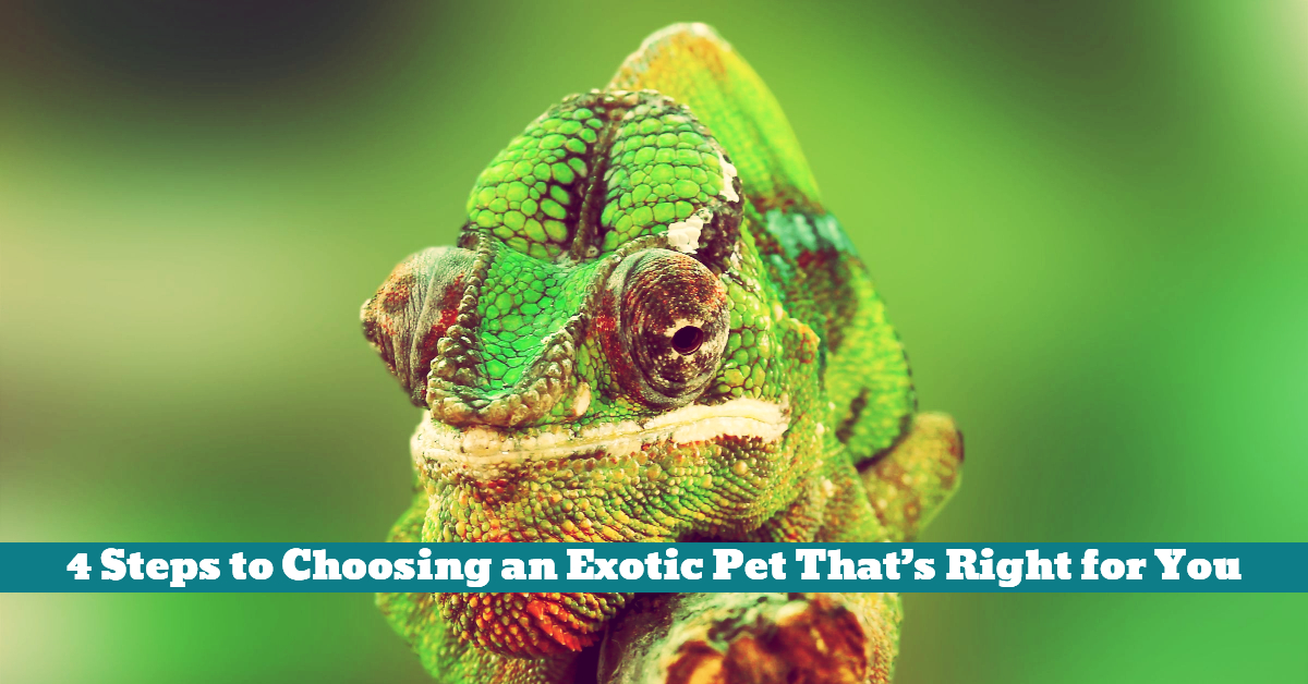 Pet_Exotic_Insurance_Medical_Care