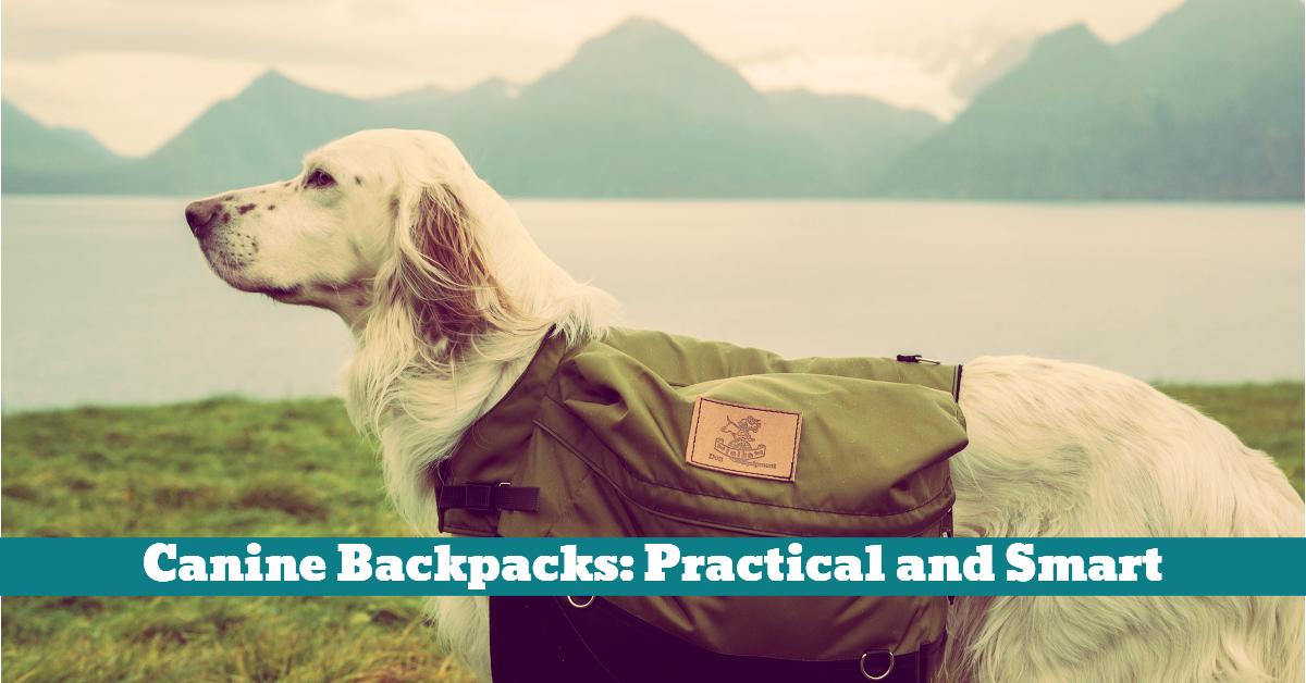 Dog_Canine_Backpack
