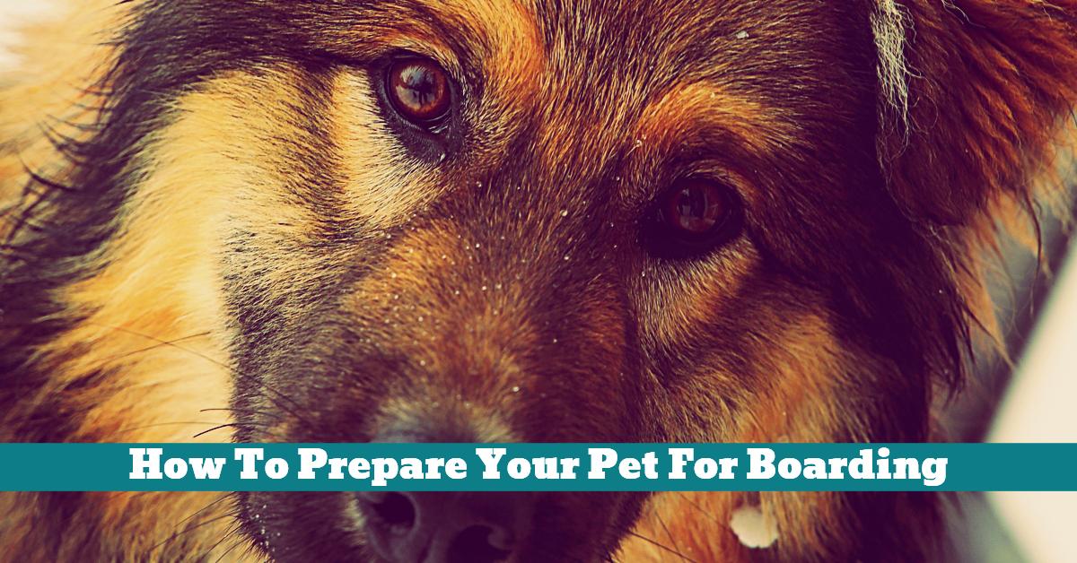 Pet_Boarding_Facilities_Vaccination_Toy