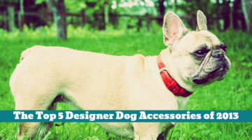 The Top 5 Designer Dog Accessories of 2013
