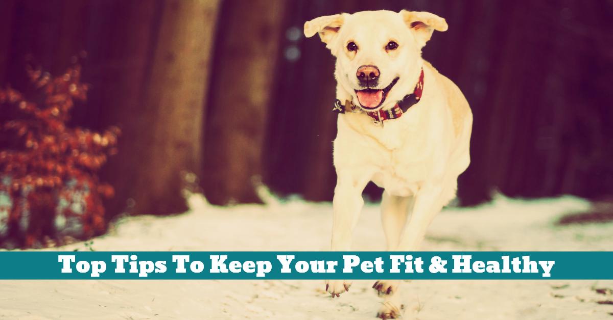 Pet_Fit_Healthy_Exercise_Diet