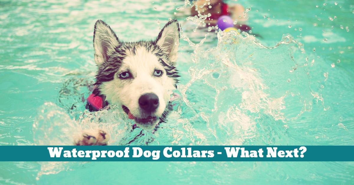 Dog_Collar_Waterproof_Adventure