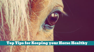 Top Tips for Keeping your Horse Healthy