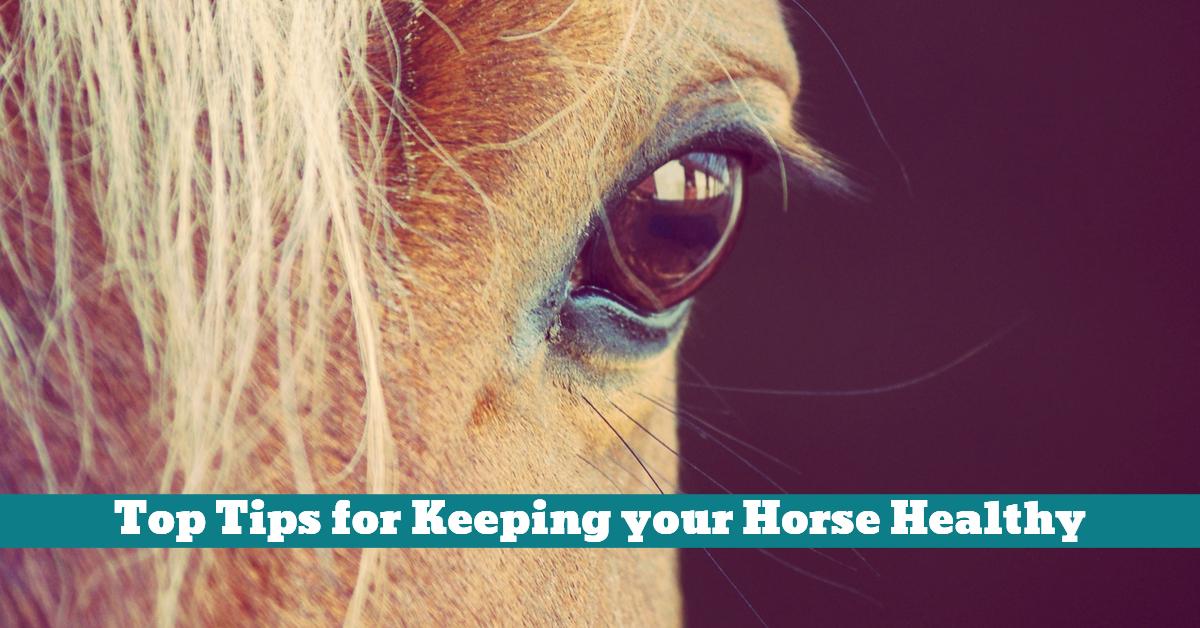 Horse_Feeding_Grooming_Shelter