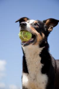 dog_with_ball