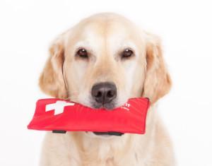 dog_first_aid
