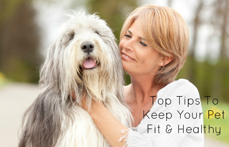 Top Tips To Keep Your Pet Fit & Healthy