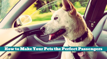 How to Make Your Pets the Perfect Passengers