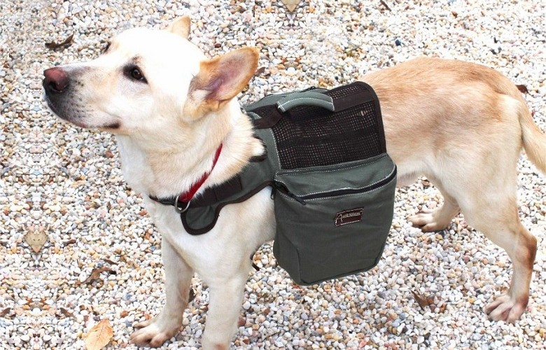 Canine Backpacks: Practical and Smart