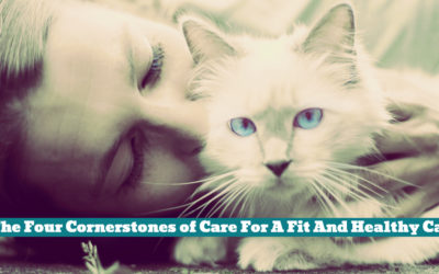 The Four Cornerstones of Care For A Fit And Healthy Cat