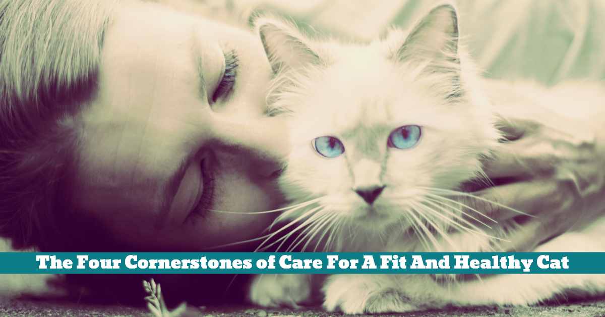 Cat_Care_Love_Attention_Diet