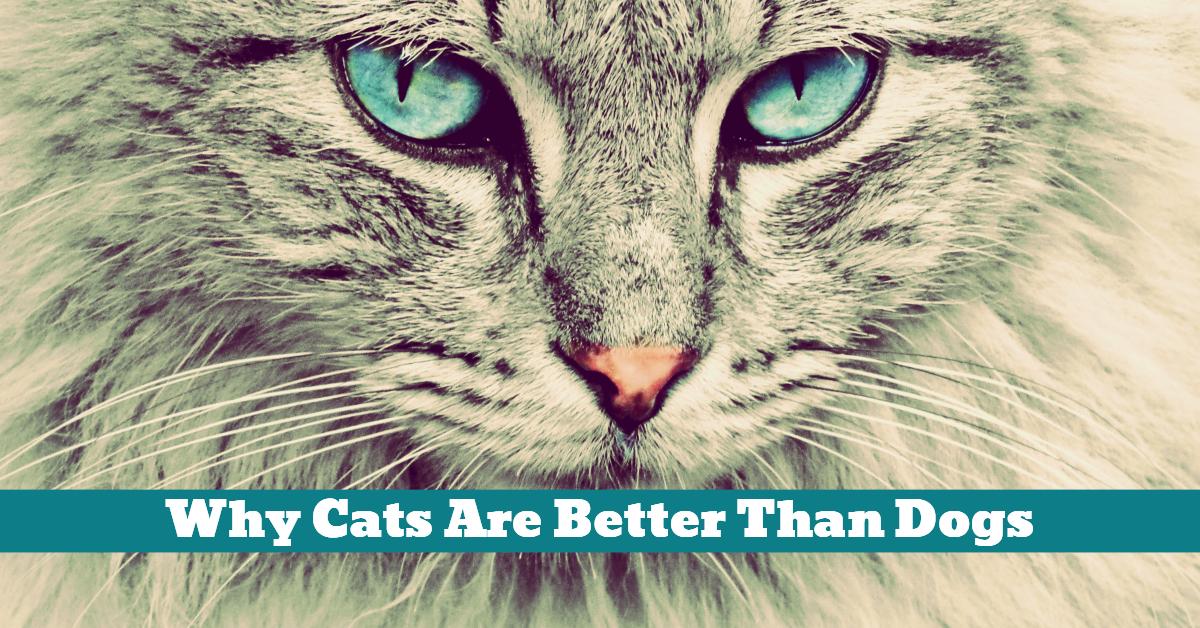 Cat_Confident_Independent_Clean