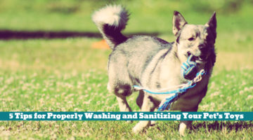 5 Tips for Properly Washing and Sanitizing Your Pet's Toys