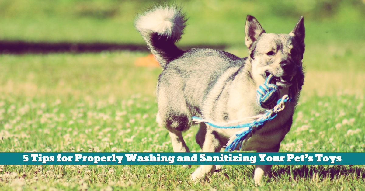Pet_Toys_Washing_Cleaning_Disinfecting