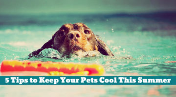 5 Tips to Keep Your Pets Cool This Summer