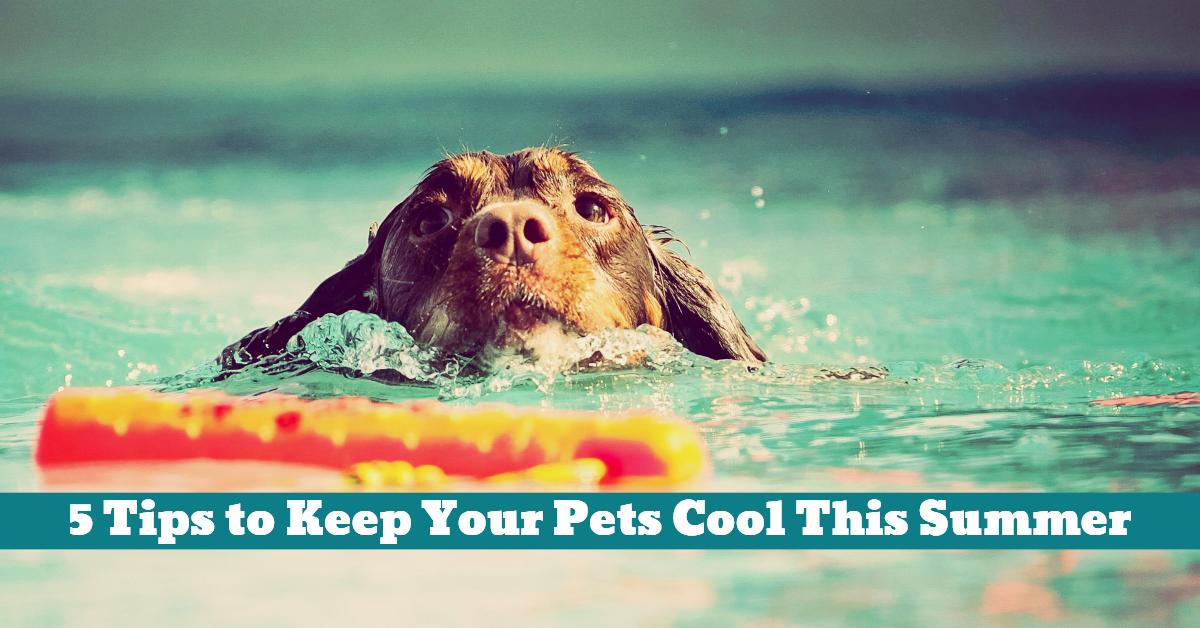 Pet_Summer_Water_Shade_Swim_Pool_Spray