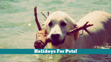 Holidays For Pets!