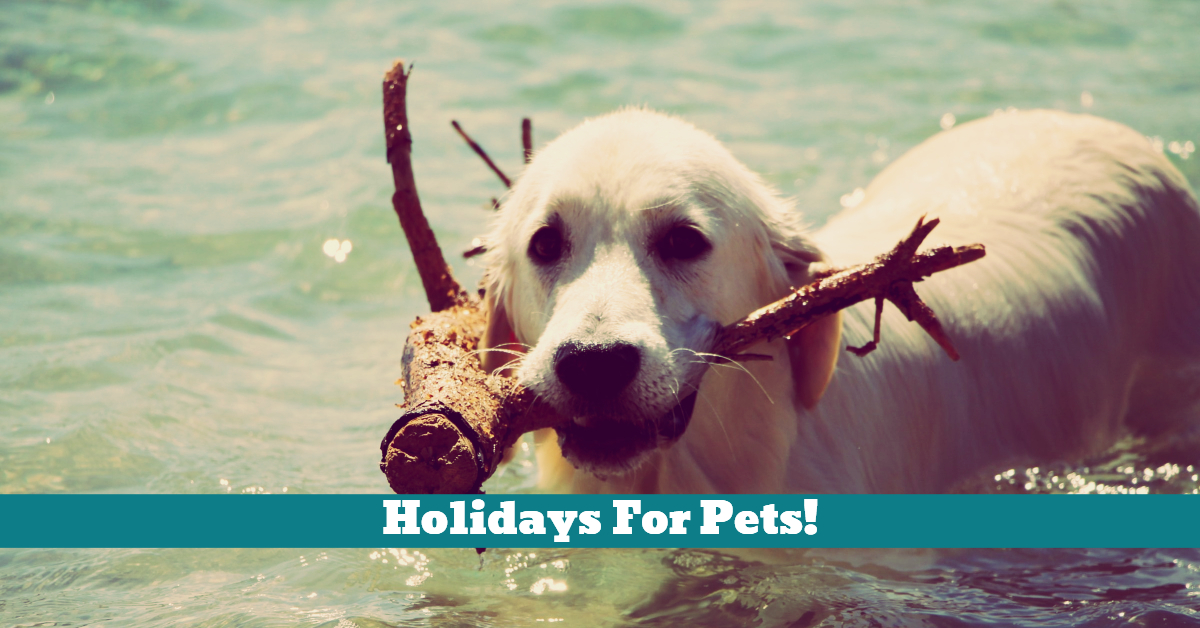 Pet_Holiday_Sitters_Kennel_Family_Hotel