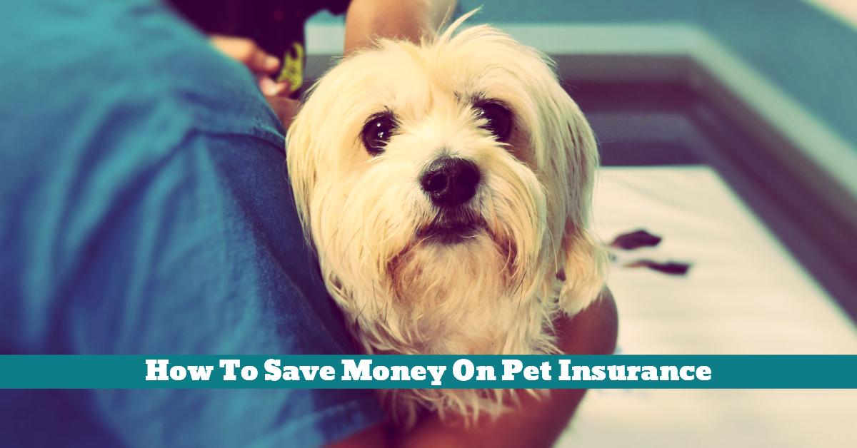 Pet_Vet_Insurance