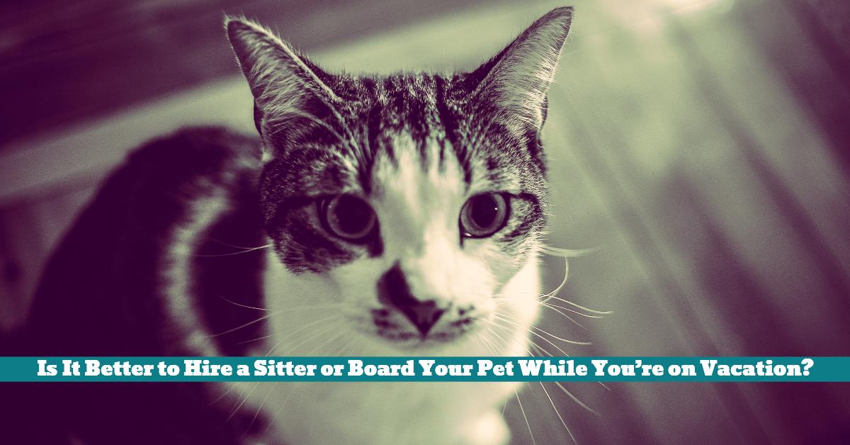 Pet_Sitter_Vacation_Board_Kennel
