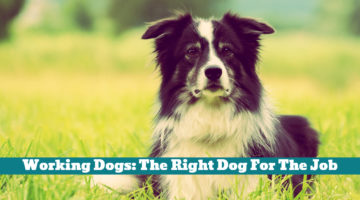 Working Dogs: The Right Dog For The Job