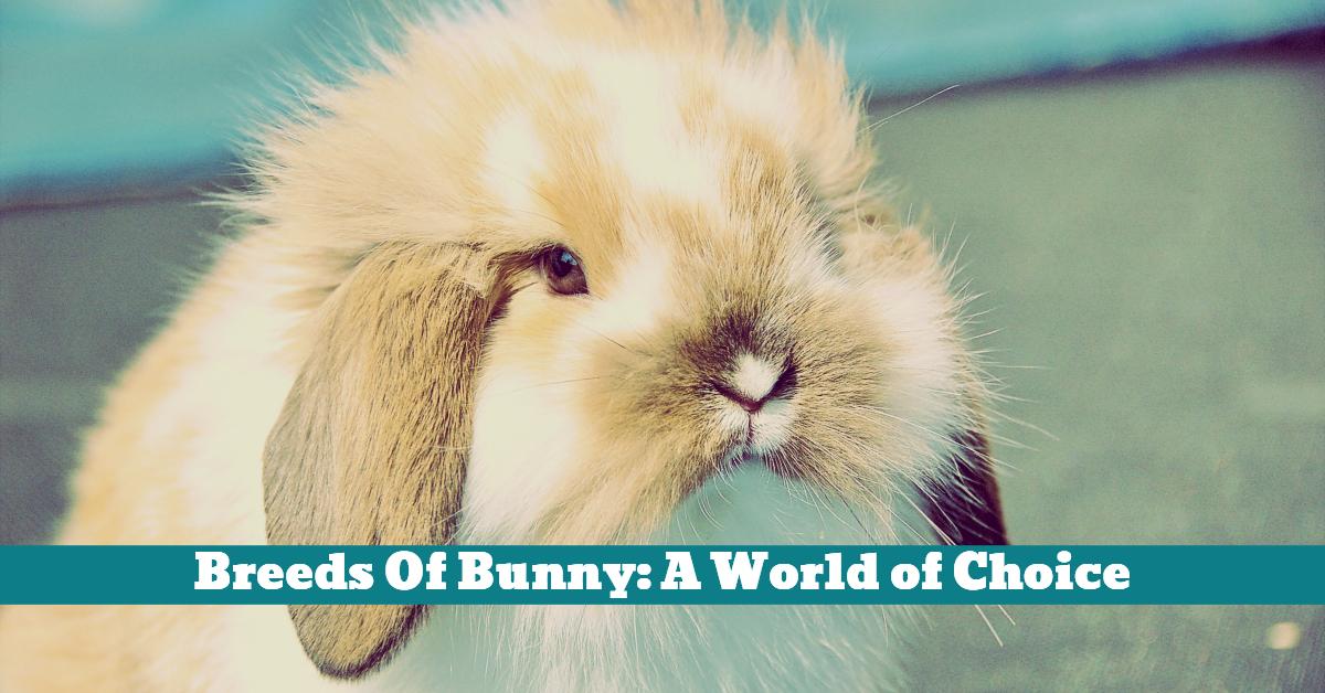 Rabbit_Choice_Breeds