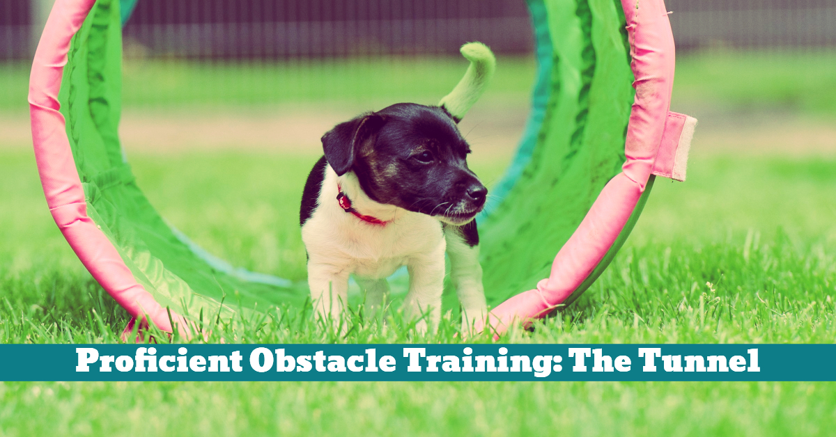 Dog_Training_Obstacle_Course_Tunnel