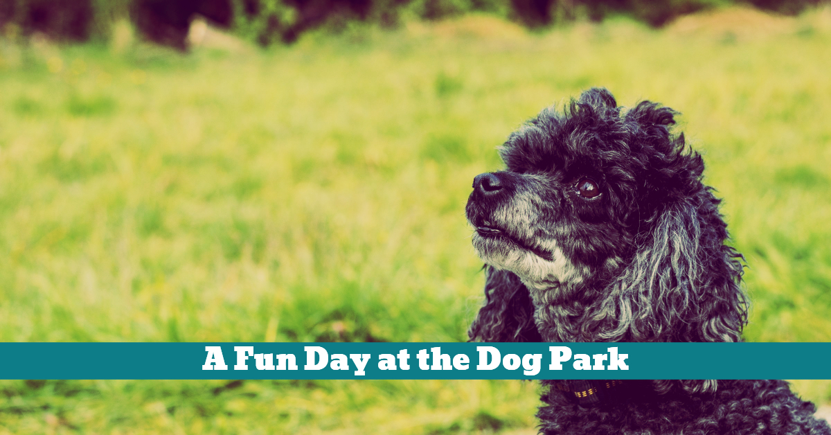 Dog_Park_Fun_Safety_Health